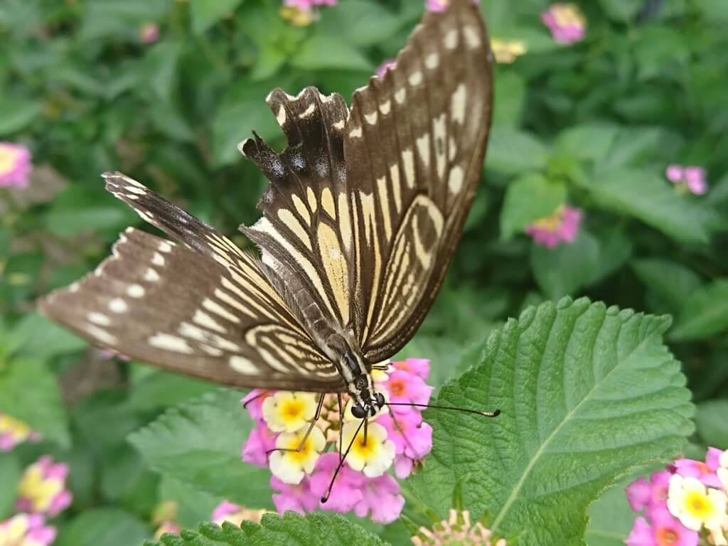 春から秋に咲く丈夫で開花期間の長いおすすめの花(多年草)の紹介