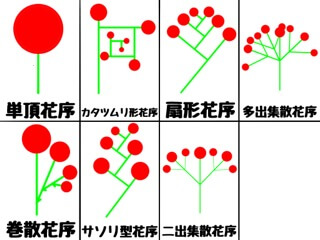 花序の種類