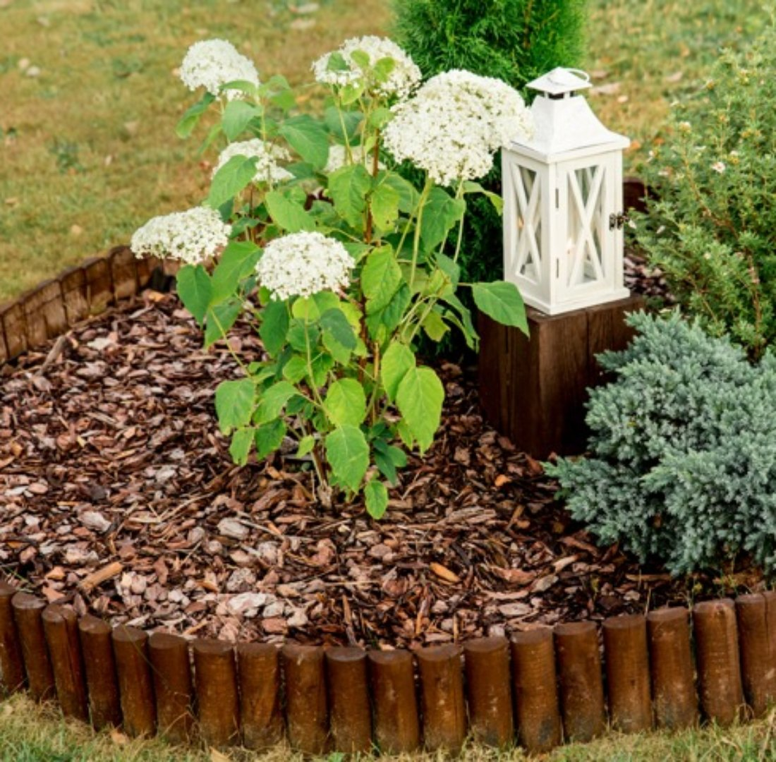 自然 花壇