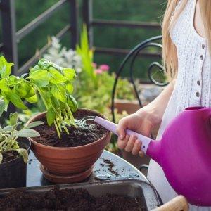 植物を植えたプランターに水やり
