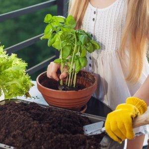 植物を植える位置を決める女の子
